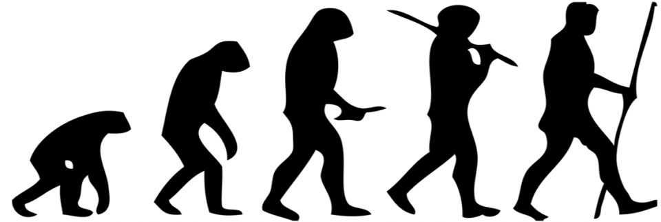 Fig 1- Human_evolution_scheme