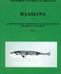 Haasiana no. 3, June 2006